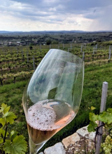 Sektarian (Tasting through the New Austrian Sekt Pyramid for NVWA)